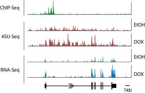 FLI: Genomweite Transkriptomiks