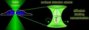 FLI: Confocal Detection Volume