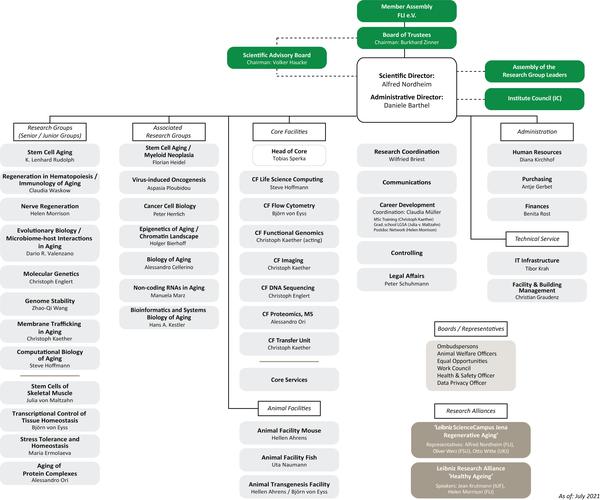 Organizational Chart of FLI