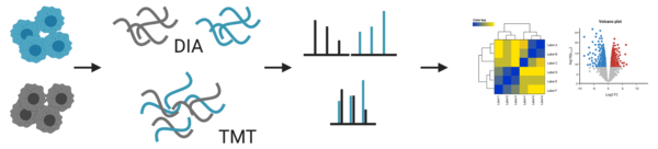 FLI: Proteomics workflow