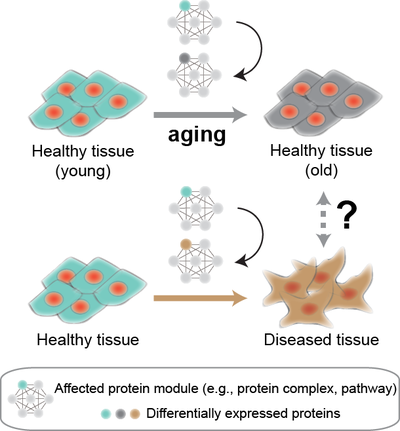 Aging protein modules