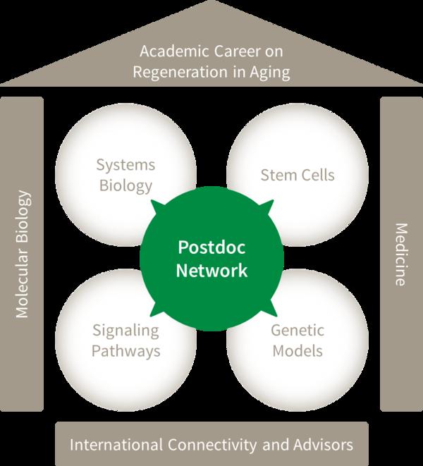 Postdoc Network RegenerAging