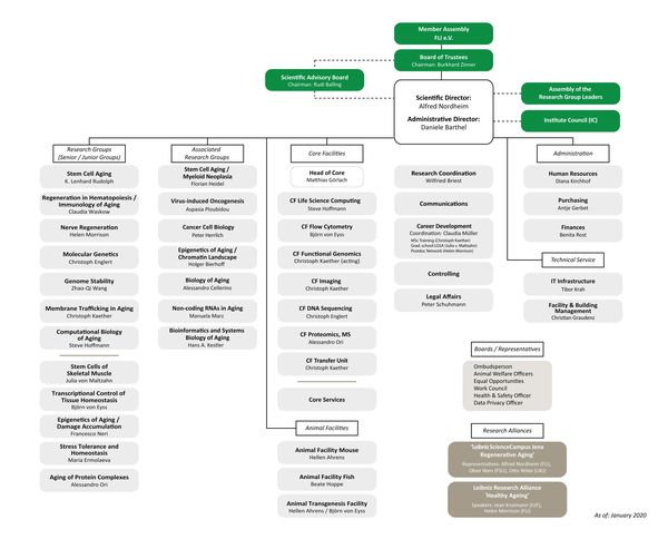 Organizational Chart of FLI