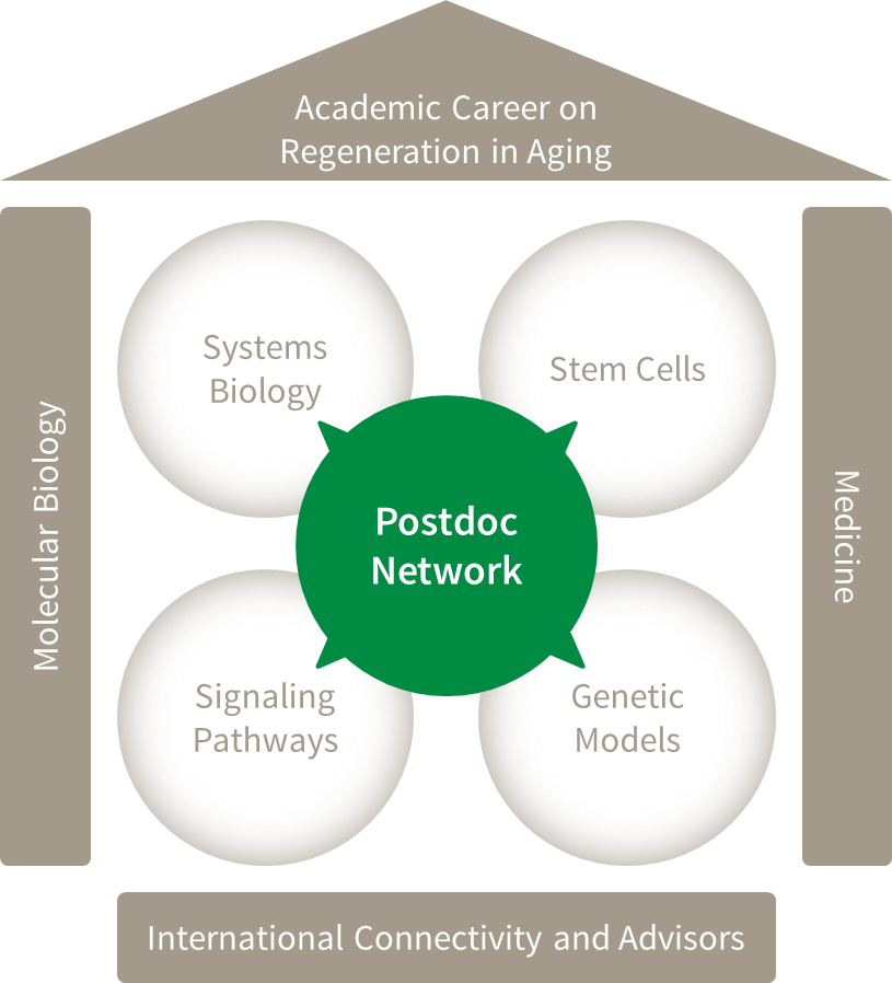 Postdoc Network RegenerAging