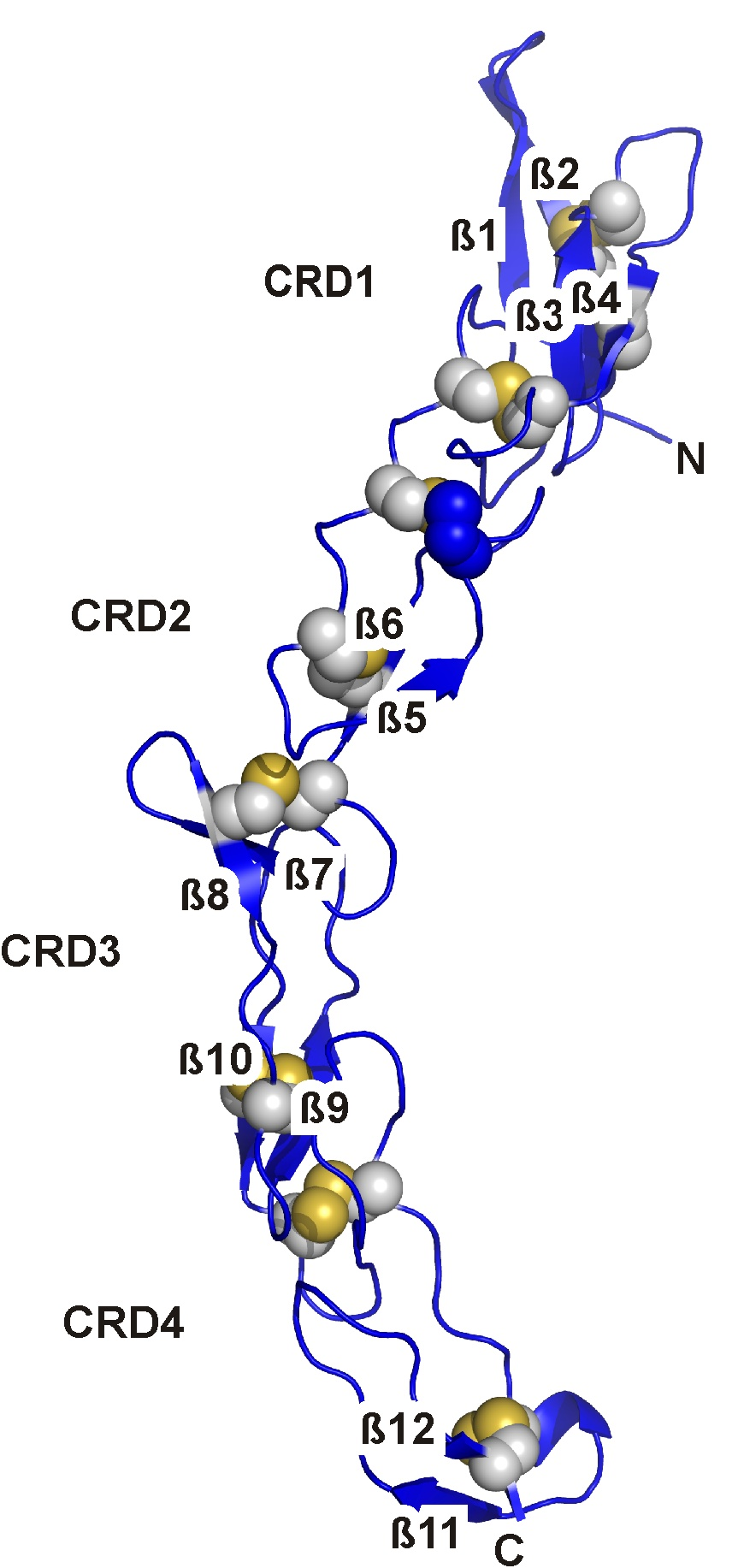 Crystal structure of death receptor six (DR6)