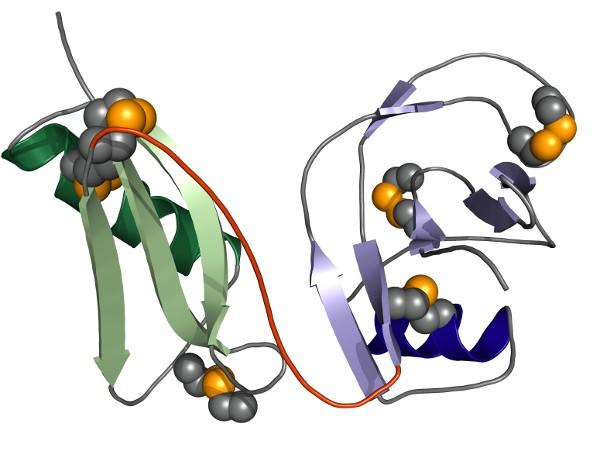 Kristallstruktur der E1-Domäne von APP